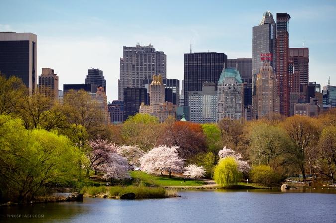 Springtime we long for in Central Park (Via L'Atelier Rouge)