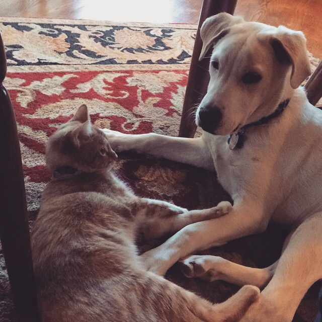Friendship, friendship (as personified by Zelda's cat and dog)